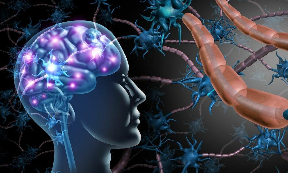 Nervenzellen im Kopf einen Menschen, Verbindungen